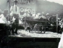 Jersey Cow Sale 1922